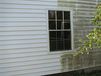 Auckland Exterior Cleaning.jpg