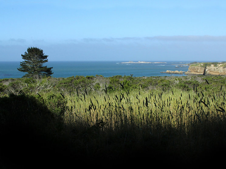 Shadow Art by Pacific - Ano Nuevo Island in Distance