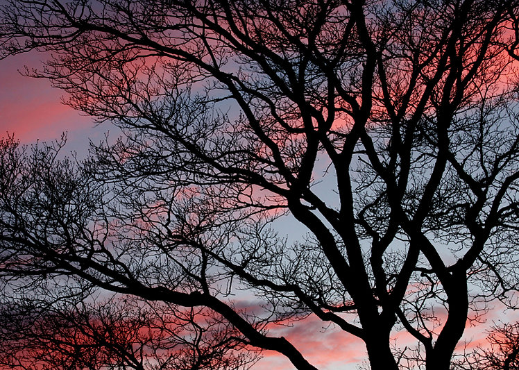 Winter Dogwood Sunset