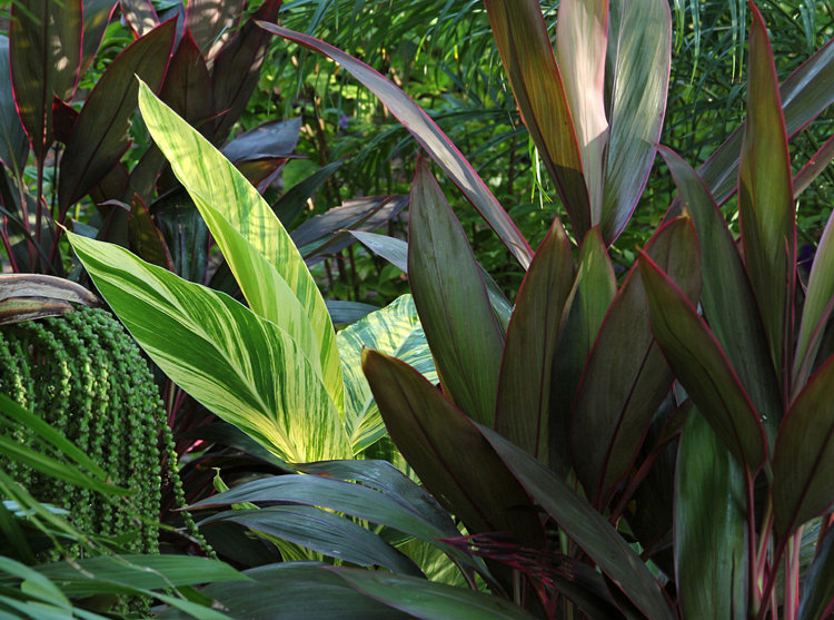 Bold Tropical Flora