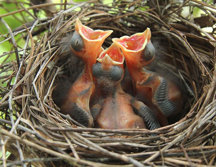 Four Cardinals Day Three