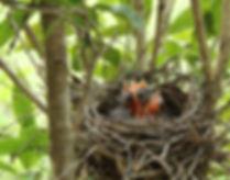 Tiny Cardinals Day Four
