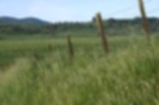 Grassland in Gilroy