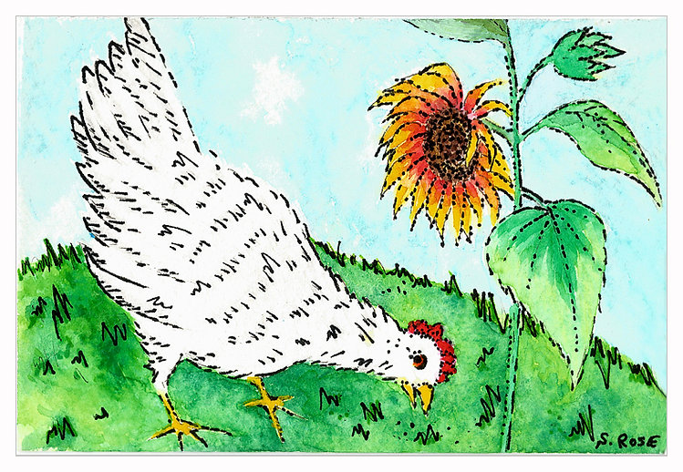 White Hen and Sunflower