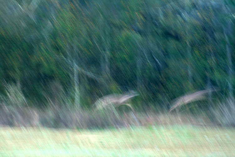 Two Deer - Abstract Image