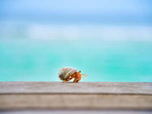 Coming Out of My Shell: A Writer's New Beginning