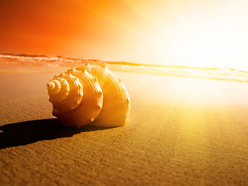 seashell on beach sand sea orange sky sun
