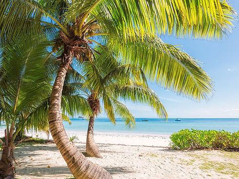 palm tree tropical caribbean beach seas sand sun sky