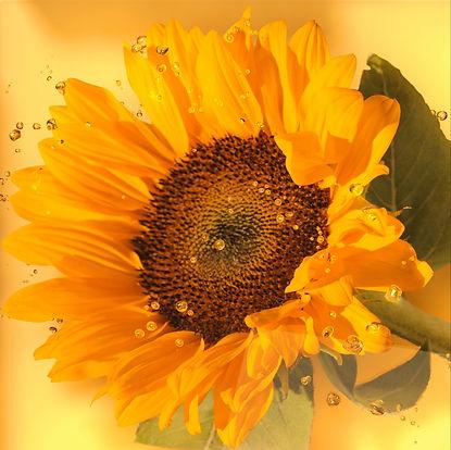 Sunflower Display_edited.jpg