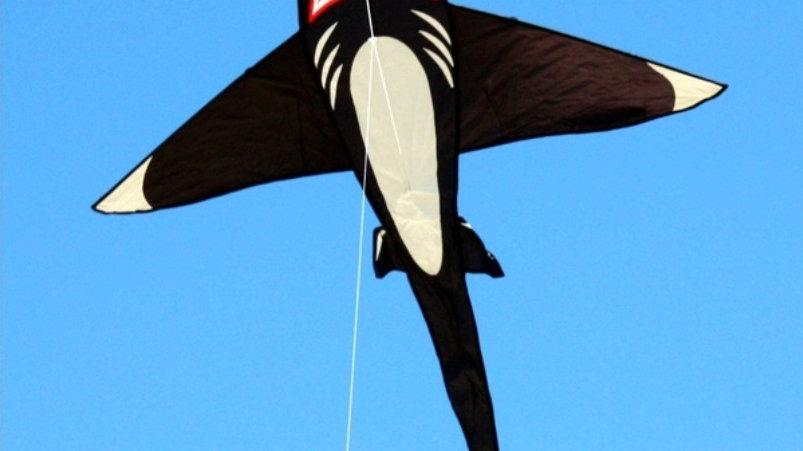 Windspeed Shark