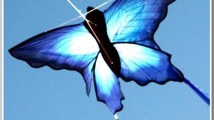Windspeed Ulysses Butterfly