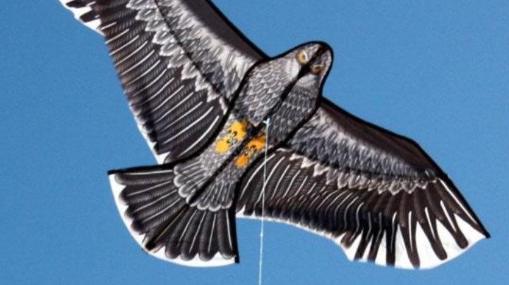 Windspeed Eagle