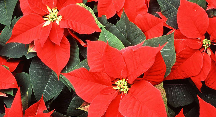 Holiday Floral Arranging