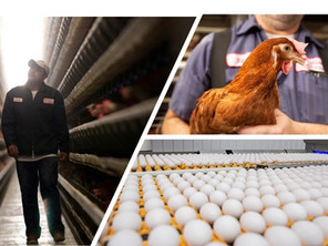 Meet Our Donors: MPS Egg Farms Gives Back