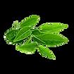 Green Tea Sunscreen