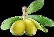 Olive Oil Skincare