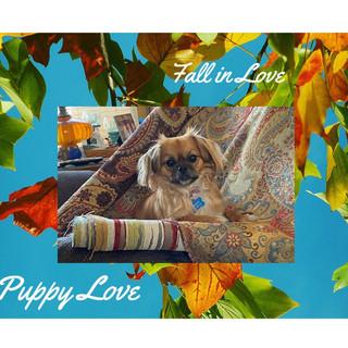 fall pup.jpg