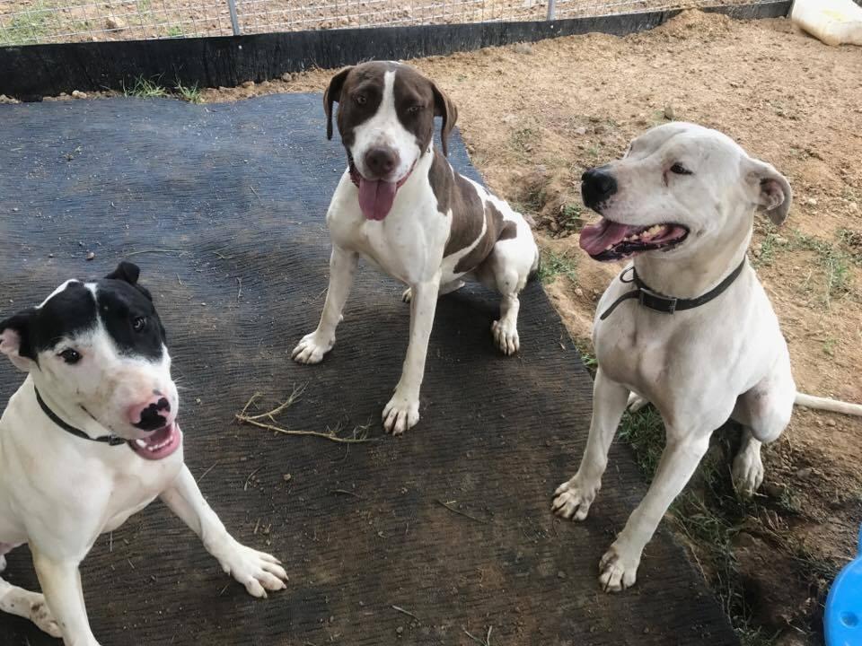 Lucy, Chaz & Knackers