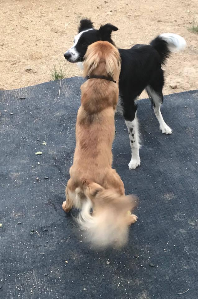 Alfie & Chloe
