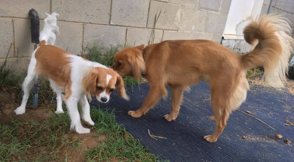 Alfie & Poppy