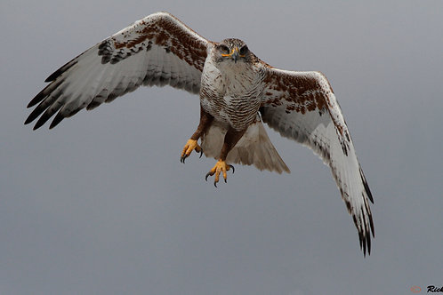 BIRDS OF PREY | Sunday 4.8.18 | 6 AM - 1 PM