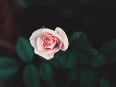 14.02 - 28.02: «Любовь и смерть: работа со штампами в кино»