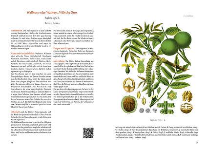 Heilpflanzen_Doppelseite-Wallnuss.jpg