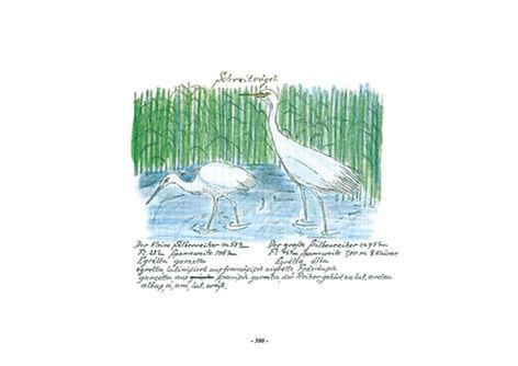 Vogel-album_Wenzel_schreitvögel.jpg