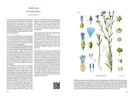 Heilpflanzen-_Doppelseite_Flachs-Lein.jp