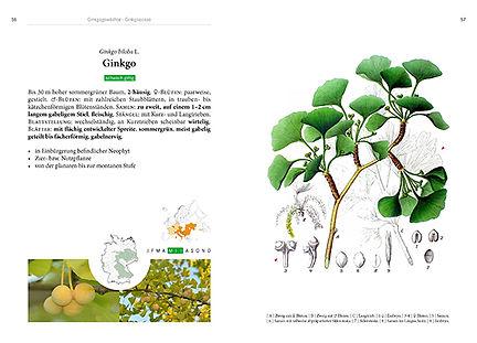 Seiten aus Baume-Innenteil-alles2.jpg