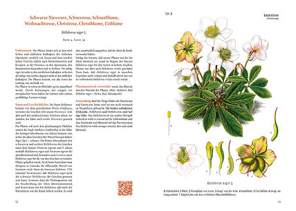 Heilpflanzen_Doppelseite-Nieswurz.jpg