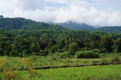 View to the Udzungwa Mountain