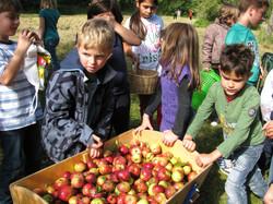 so gute Apfelernte!