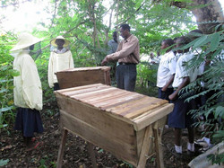 Ahmed and his beekeeping class