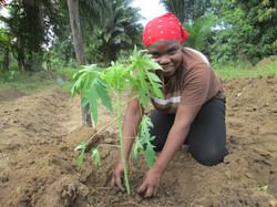 Mutter Kind Garten Papayas werden eingepflanzt
