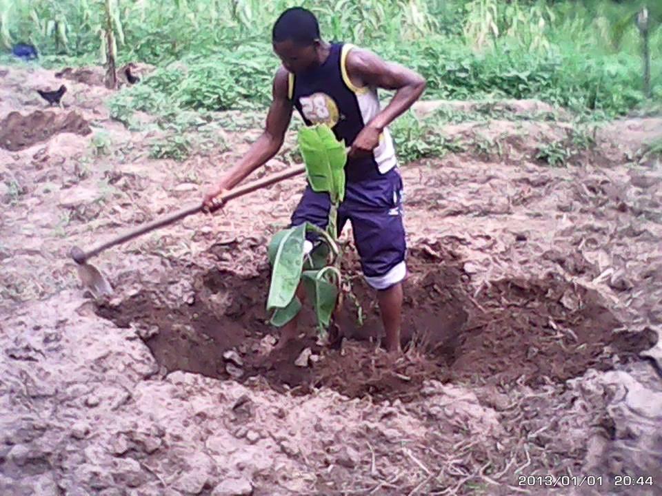 Robert pflanzt Bananen
