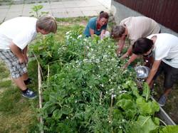 Gartenprojekt in Deutschland, Jugendliche beim Hochbeet richten