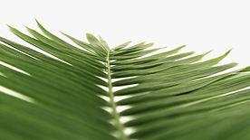 palm-on-white-still.jpg
