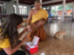 buddhist thai monk temple dog cat vet vaccinaton