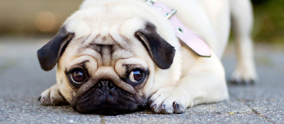 2020: Are Our Pet Dogs In A Behaviour Crisis?