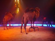Circus Nock IV