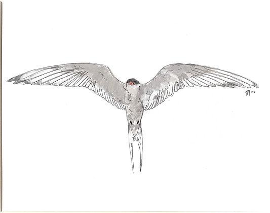 The Arctic Tern (Print)