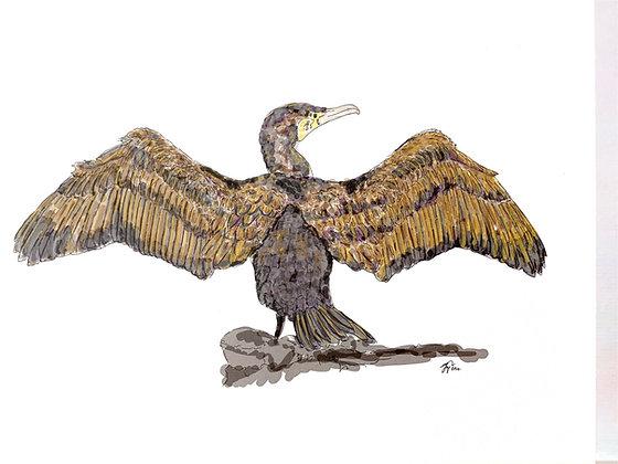 The Cormorant (Print)