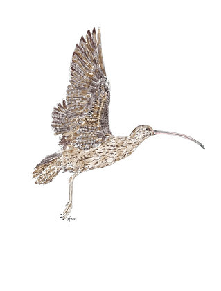 The Curlew (Print)