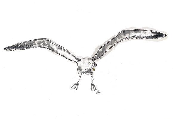 The Albatross (Print)