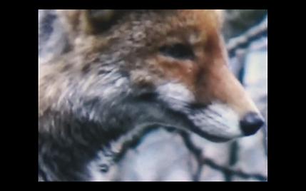 Screen Shot 2021-03-16 at 23.02.50.png