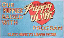 Puppy Culture.jfif