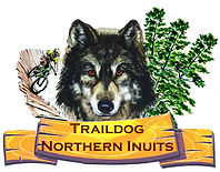 #Traildog Northern Inuits, #Trail Dog Northern Inuits, #Northern Inuit Breeder, #Northern Inuit Breeders, #Northern Inuit Breeders UK, Traildog Northern Inuits, Trail Dog Northern Inuits, Northern Inuit Breeder, Northern Inuit Breeders, Northern Inuit Breeders UK