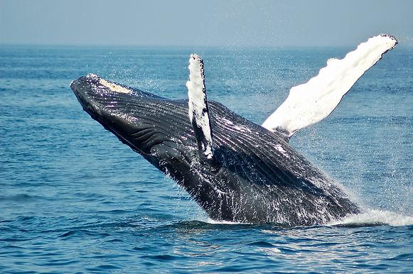 TJ Adventures Whale Watching.jpg