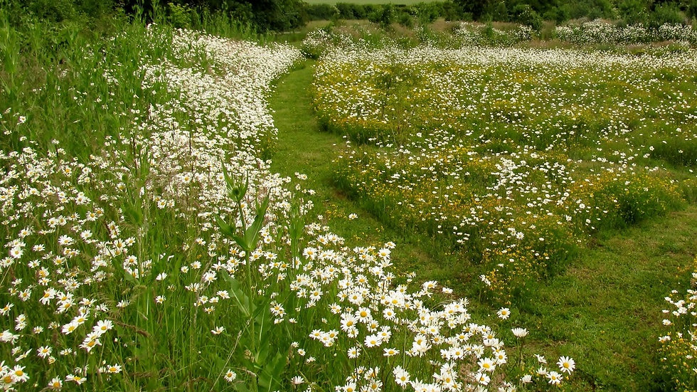 Species Rich Meadow